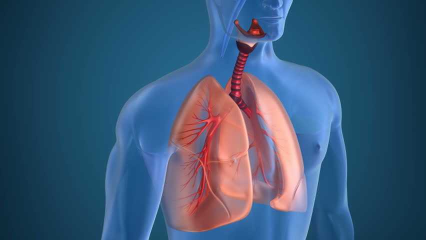 Трансплантация без отторжения: «индивидуальный» имплант.